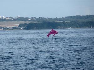 海面を飛ぶイルカ.jpg